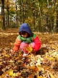 收集叶子的秋天 免版税库存图片