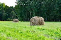 收集在一个金黄领域的干草,圆的大包干草,农业,农场,牛哺养,农村风景 免版税库存图片