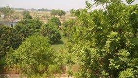 收集在森林里的Lovlt树 库存图片