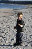 收集在沙子海滩的小男孩壳在冬天 库存图片