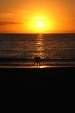 收集在海滩的男孩壳在日落在特内里费岛 免版税库存图片