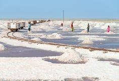 收集在盐农场,印度的盐 免版税图库摄影