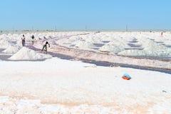 收集在盐农场,印度的盐 库存图片