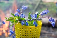 收集在篮子春天第一朵花  库存照片