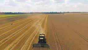 收集在领域的联合收割机金黄成熟麦子 鸟瞰图 股票视频