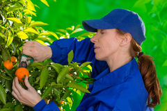 收集妇女的蜜桔橙色农夫 库存图片