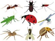 收集昆虫集向量 免版税库存照片