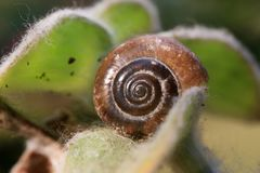 收集来穿上知道的我的壳蜗牛t 免版税库存图片