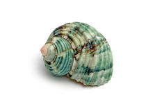 收集来穿上知道的我的壳蜗牛t 库存图片