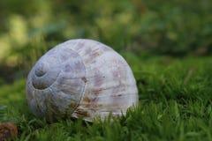 收集来穿上知道的我的壳蜗牛t 免版税图库摄影