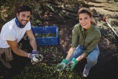 收集橄榄的微笑的年轻夫妇在农场 库存照片