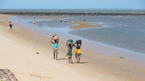 收集沿海滩的本机贝类 免版税库存图片
