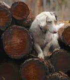 收集火炉的木头 免版税库存照片