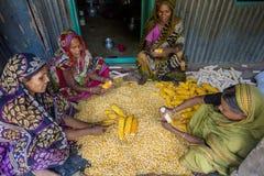收集玉米, Manikgonj,孟加拉国的一些地方妇女 免版税图库摄影