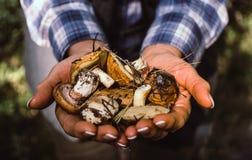 收集的秋天森林蘑菇 免版税图库摄影