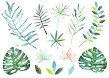 收集种植热带 水彩元素 向量例证