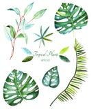 收集种植热带 水彩元素 库存例证