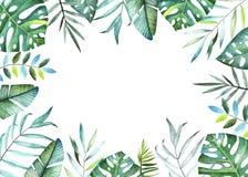 收集种植热带 水彩框架 向量例证