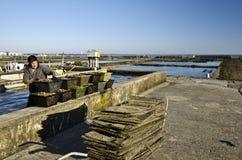 收集笼子用牡蛎的工作者在牡蛎农场 免版税库存照片