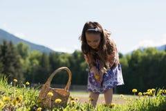 收集花的逗人喜爱的女孩从领域 免版税库存照片