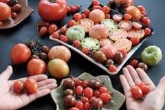 收集蕃茄,抗癌便宜的食物 免版税图库摄影