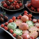 收集蕃茄,抗癌便宜的食物 免版税库存照片