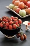 收集蕃茄,抗癌便宜的食物 库存照片