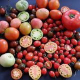 收集蕃茄,抗癌便宜的食物 图库摄影