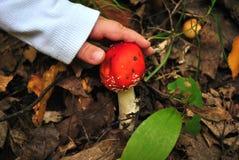 收集蘑菇毒 免版税图库摄影