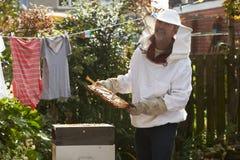 收集蜂蜜的成熟人从蜂房在庭院里 免版税库存照片