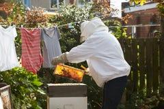 收集蜂蜜的成熟人从蜂房在庭院里 免版税库存图片