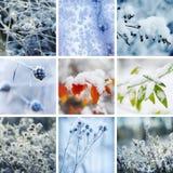 收集设计人设置了雪雪花冬天您 库存图片