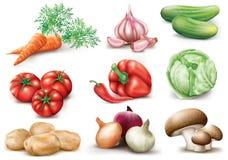 收集设计要素蔬菜 库存照片