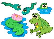 收集青蛙 图库摄影