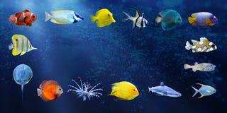 收集鱼极大热带 免版税图库摄影