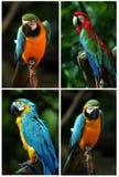 收集鹦鹉 免版税图库摄影