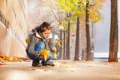 收集黄色秋叶的愉快的男小学生 库存图片