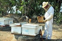 收集Rosh的Hashana蜂蜜 库存照片