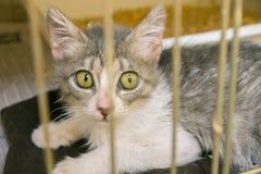 收养的风雨棚小猫 库存照片