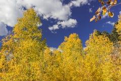 改变与华美的多云蓝色的美丽的亚斯本树肤色 免版税库存照片
