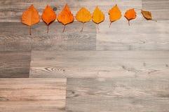 改变季节的概念 秋天从淡黄色通过到黑暗褐红或红色在木背景 库存图片