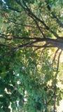改变的树 库存图片