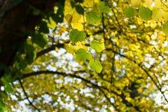改变的秋天颜色 库存照片
