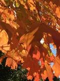 改变肤色的秋天叶子 图库摄影