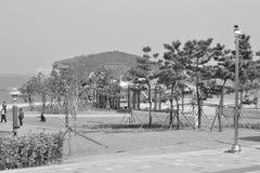 30更改的卫兵7月韩国国王好朋友s汉城南部 库存照片
