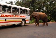 攻击教练通配大象的乘客 免版税库存照片