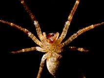 攻击蜘蛛 免版税库存图片