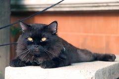 放下与棕色墙壁的恶意嘘声 猫是与软的毛皮的一只小被驯化的肉食哺乳动物 免版税图库摄影