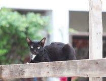 放下在方形的木头的黑白猫 免版税库存图片