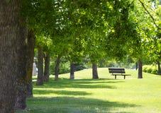 放光在公园区域的太阳 免版税库存照片